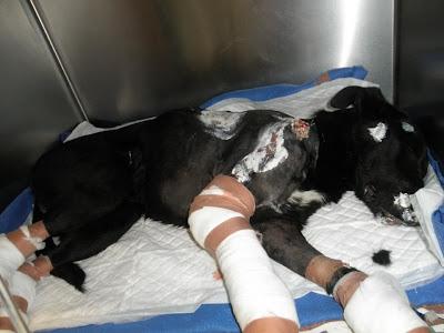 Sparky, o cão acorrentado e arrastado por um carro em Vila Real